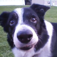 Buddy... the most amazing dog