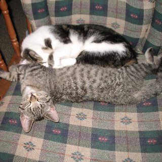Snuggle time on the rocker.