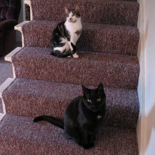 Miss Kissa and My Frankie boy (passed away June 2011-17 yrs old)