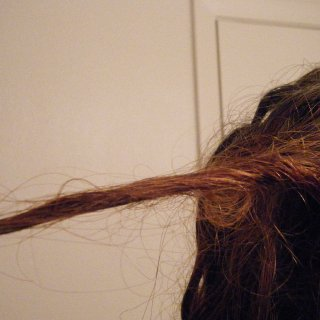 After rubbing my scalp today when 'shampooing' I discovered I really created a lot of work for myself because I had a congo of massive proportions going on in the back left quarter of my head. After sorting the mess out I found this funky knot. Isn't it cute?