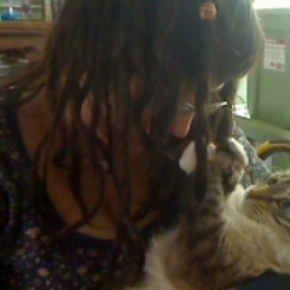 Hehe, my kitten Dexter trying to grab my dreads while I give him a belly rub.