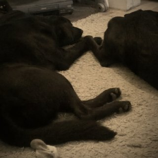 They hold hands when they lay together. They do this a lot.