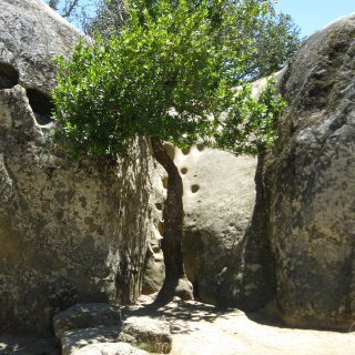Cool tree between rocks.