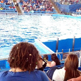 I'm always the one taking the pictures... here's a picture my mom-in-law got of me taking pictures at Sea World. It's the first one I've had with the back of my hair without having to do weird twists with my own camera. Yay! Oh, I'm about 4.5 months.