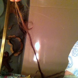 Found my first loop today in one of my month and a half old natural dreads. There's lots of other loops and bumps but I thought this one was really worth sharing. I almost regret my 22 TnR dreads (counted them the other day) because my natural ones are doing so good with some amazing progress!