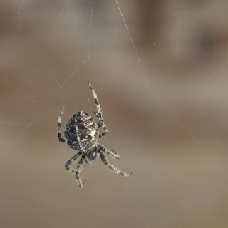 spider outside my window remaking its web after the wind ruined it.