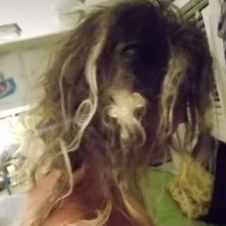 Natural Dreads, with 3 to 4 T & R attempts-turned-natural, after almost 3 months total neglect.