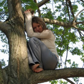 dee in tree