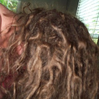 4 month old dreads with lots of zigzags and loops 005