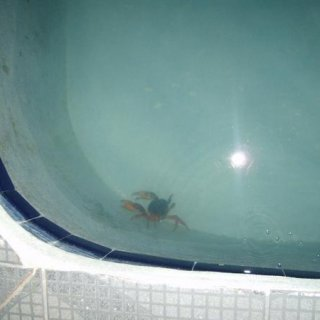 why i dont swim in the pool at night