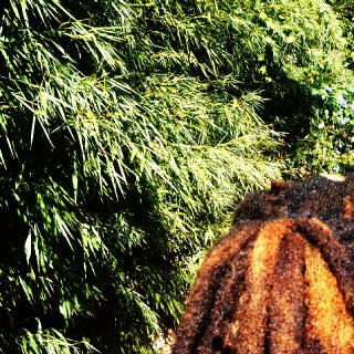 Here is a back view of my dreadlocks.