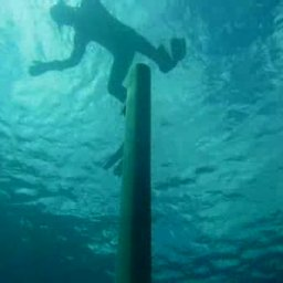 sail freediving