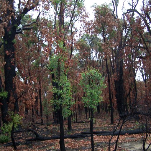 The Aussie bush after a bush fire...