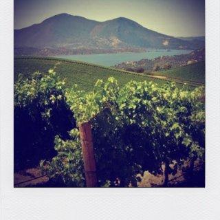 vineyard in napa valley lake berryessa