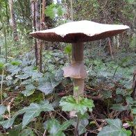 mushroom twirl