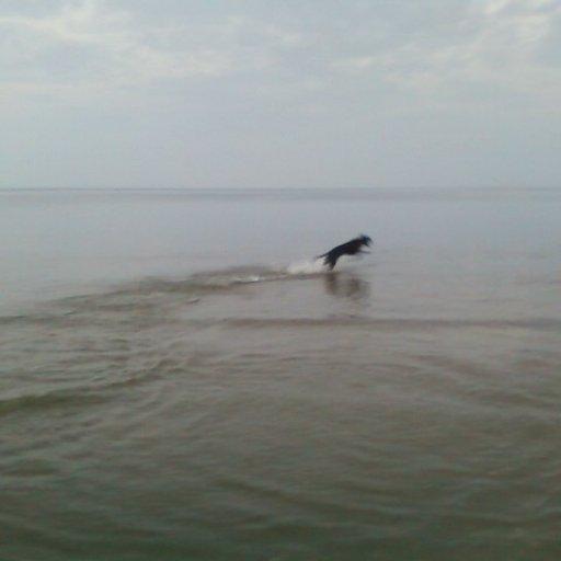 zwater
