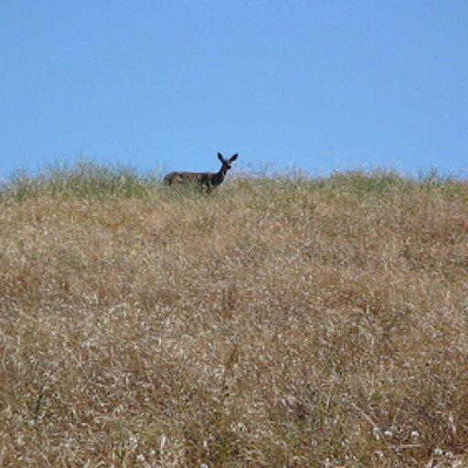 Deer Spotted