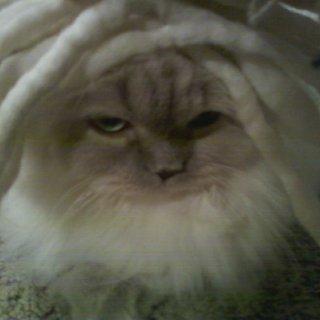 my kitty is a dread head just like me.
