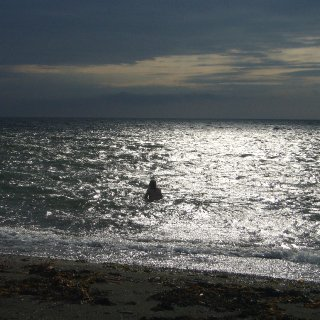 cold evening dip in the gulf of st laurence