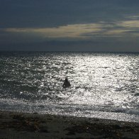 Cold evening dip in the gulf of St-Laurence