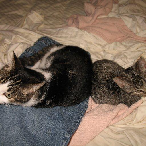 Kissa & Ginny