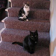 Kissa & Frankie
