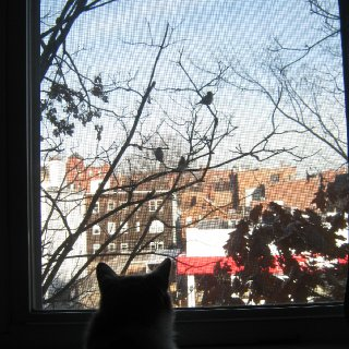 My girl Selkies looking out the window at the birds last Fall.