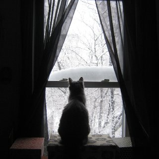 This was our first blizzard in Boston. Selkies was intrigued by the snow.