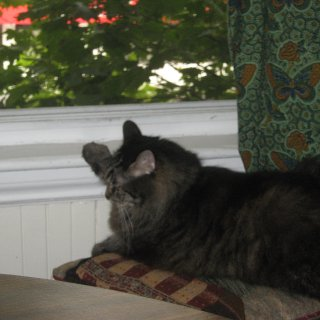 Resting her paw on the windowsill : )