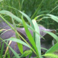 Champa...the silver panther on the prawl