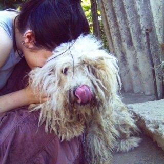 My dready dog, Trixie. <3