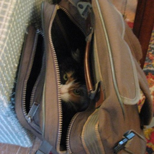 Missy in Bag