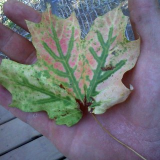 awesome leaf i found at work