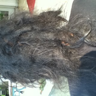 I skipped taking pic last month. and around sept last year the first dread was born.