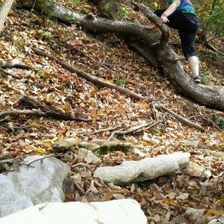 climbing up a tree p