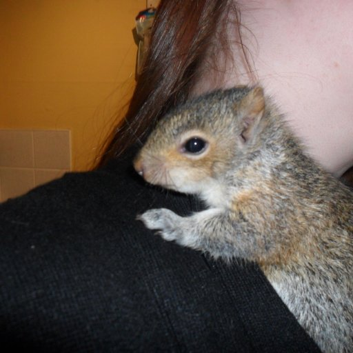 Sky. Baby squirrel i saved.