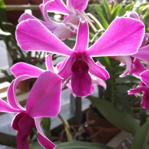 lighted orchid