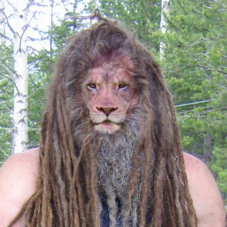 the smaller red dreads are about nine months old. the larger blonde ones are a little over three months old