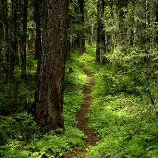 forest trail 13529