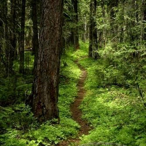 forest_trail-13529