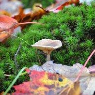 Mushroom and slug...