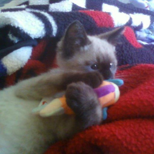 Milo & his fish