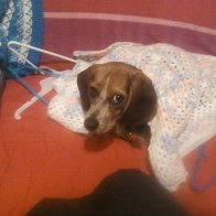 Rescue baby DaisyBeeBee