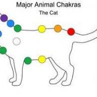 cat chakra