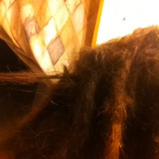 somewhere close to the 2 mnth mark, my hair is starting to do what it wants. here is a brand new dread already dreading and just kind of separated itself form the rest. and lots of loose hairs that may work themselves in somewhere.