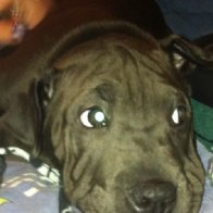 My big puppy.