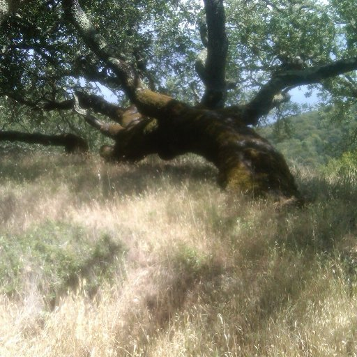Hiking in Novato, CA 5/26/12