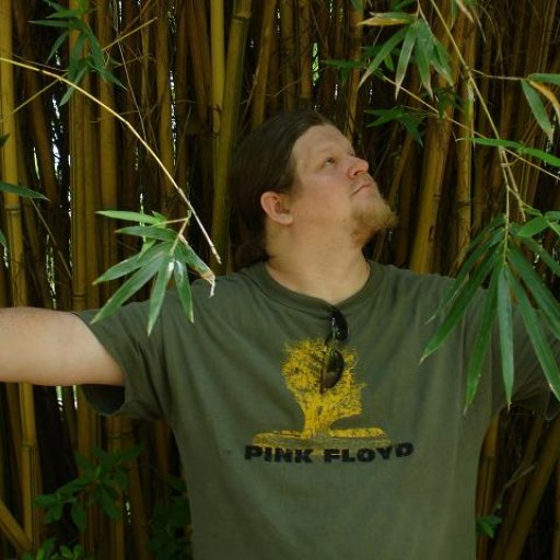 bamboo forest - craig