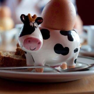 do cows really lay eggs