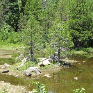 Some pics from my walks around the Gerle Creek Reservoir, El Dorado National Forest, Sierra Nevada Mountains...
